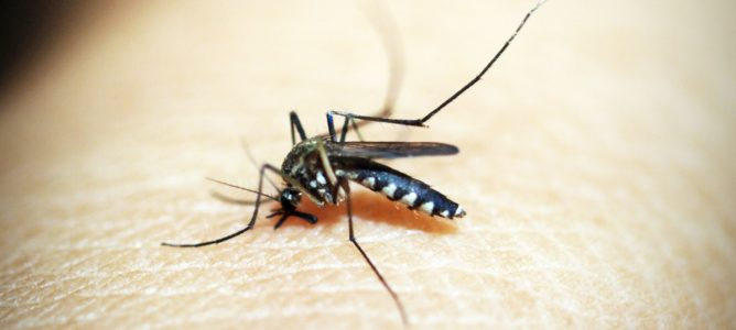 How to Eliminate Mosquito Problems This Season