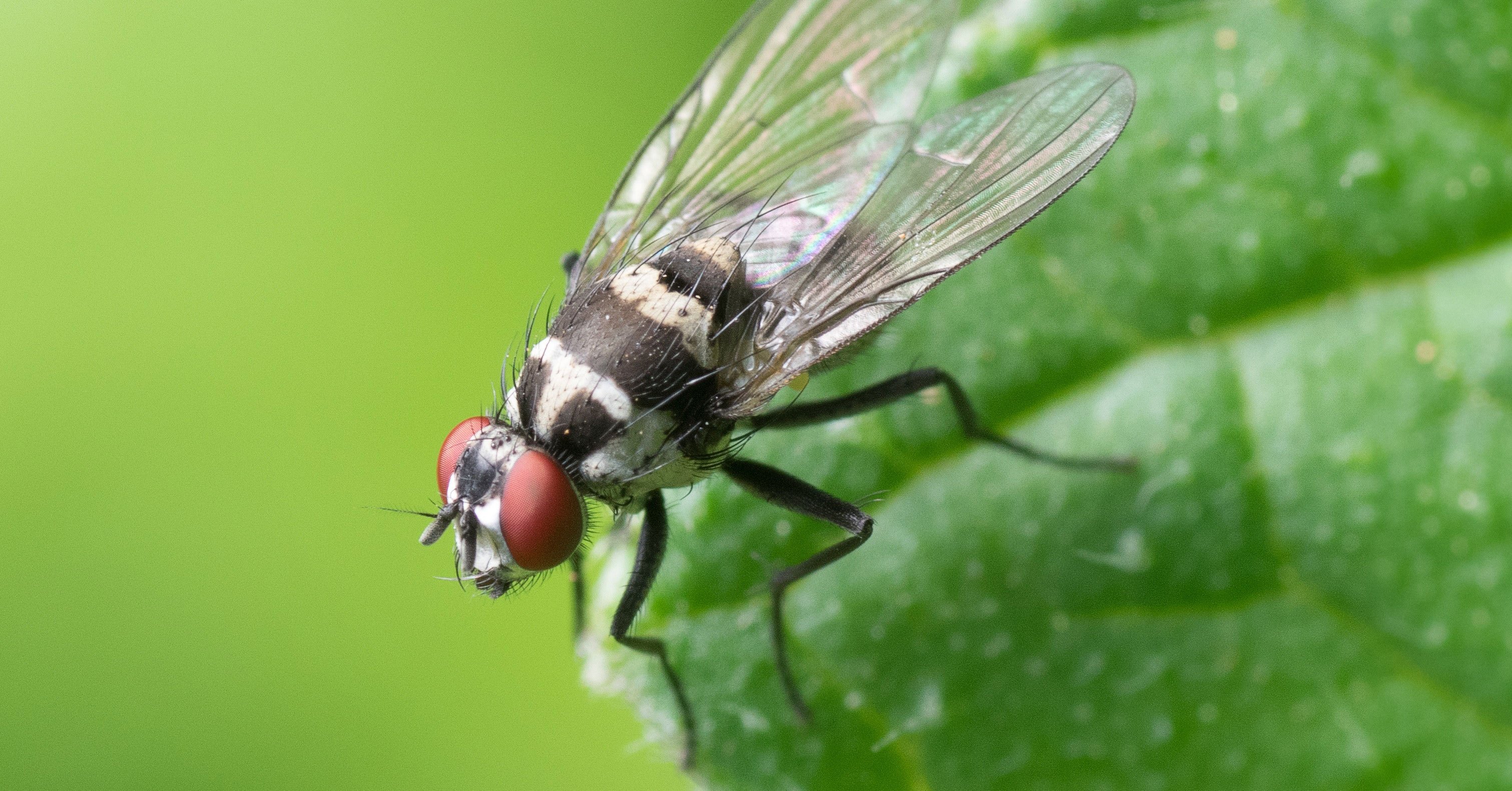 How to Prevent Flies and Interesting Facts About Them ...